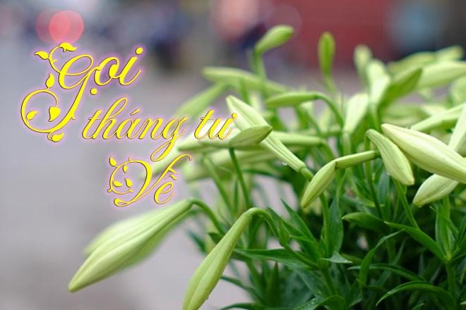Loài hoa chỉ nở vào một tháng duy nhất trong năm - tháng Tư!